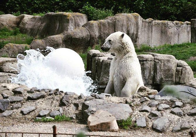 удивленный медведь