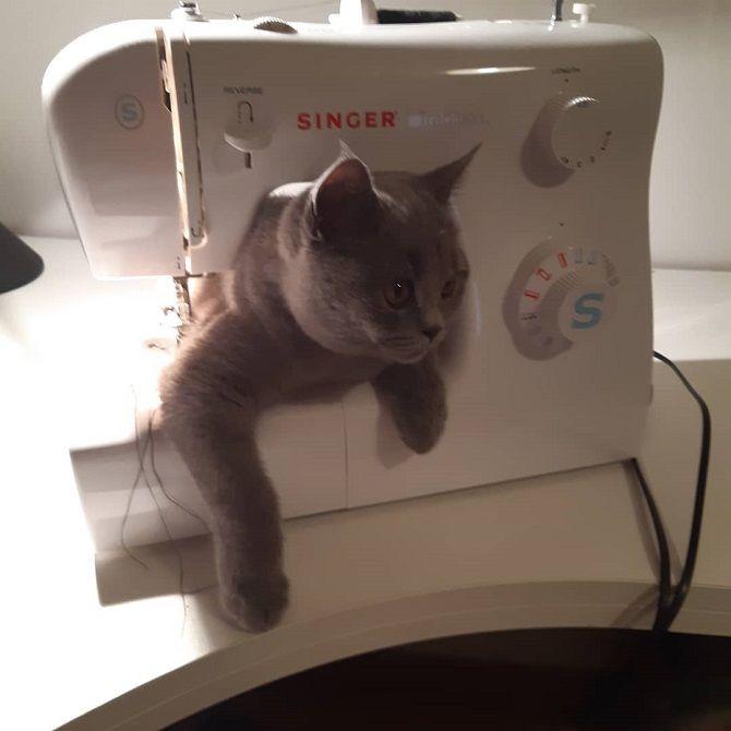 кот в швейной машинке