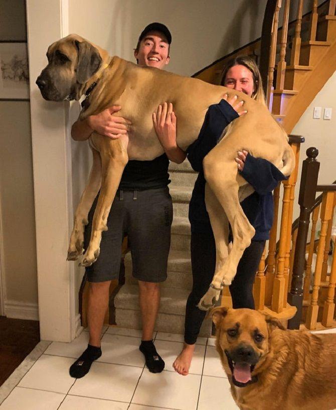 огромнейшая собака