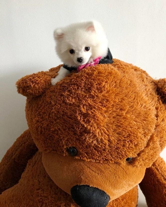 пёс и плюшевый медведь
