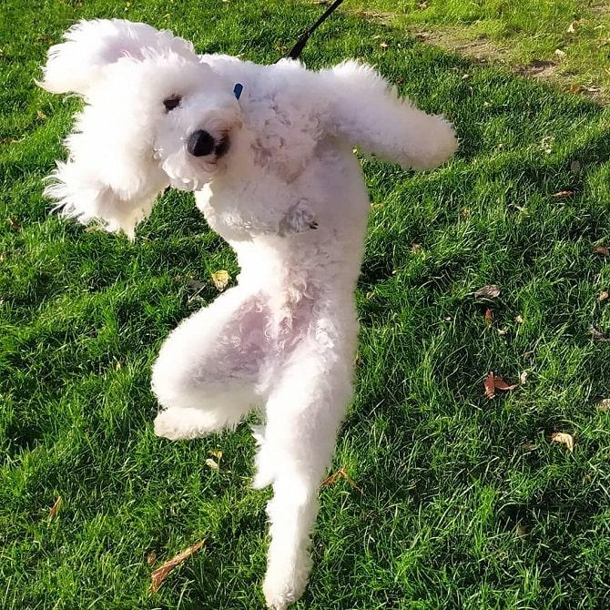 пёс танцует