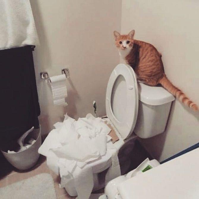 кот шкодник