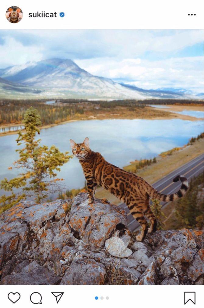 7 найкрасивіших кішок, у яких є свій Інстаграм 12
