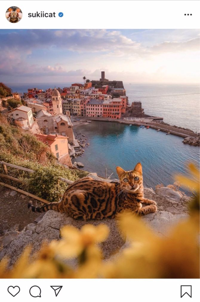 7 найкрасивіших кішок, у яких є свій Інстаграм 11