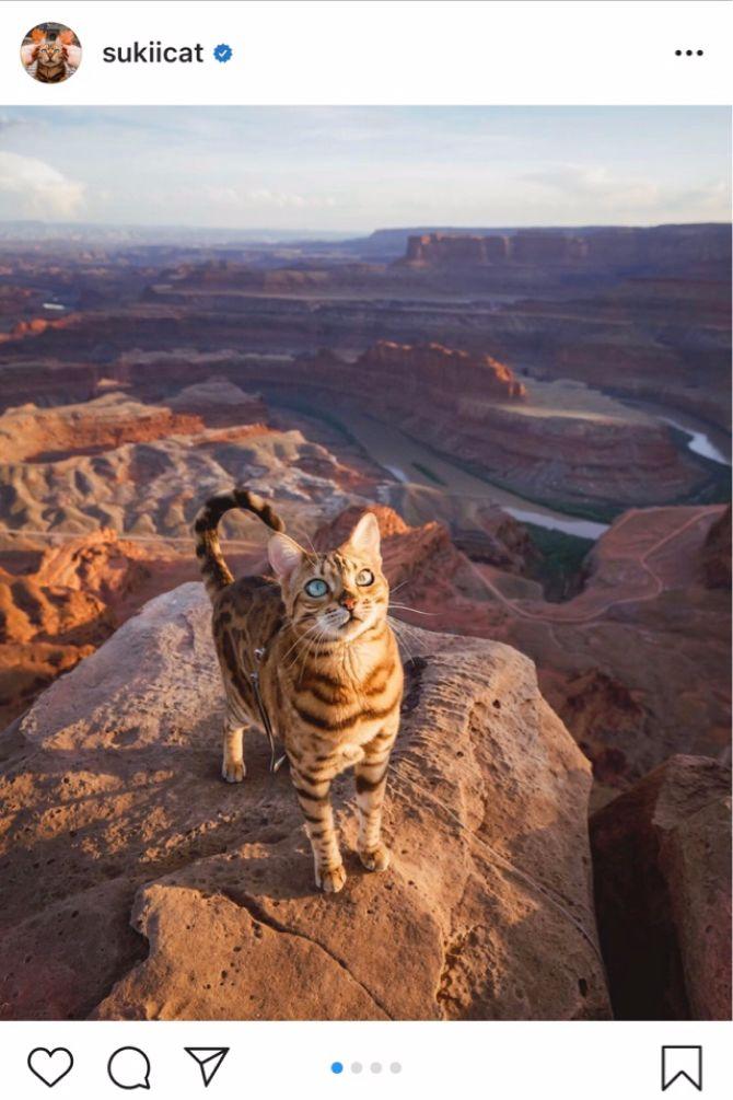 7 найкрасивіших кішок, у яких є свій Інстаграм 10