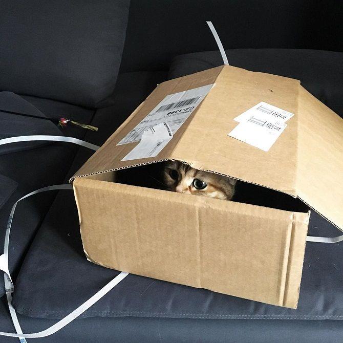 кошка в коробочке