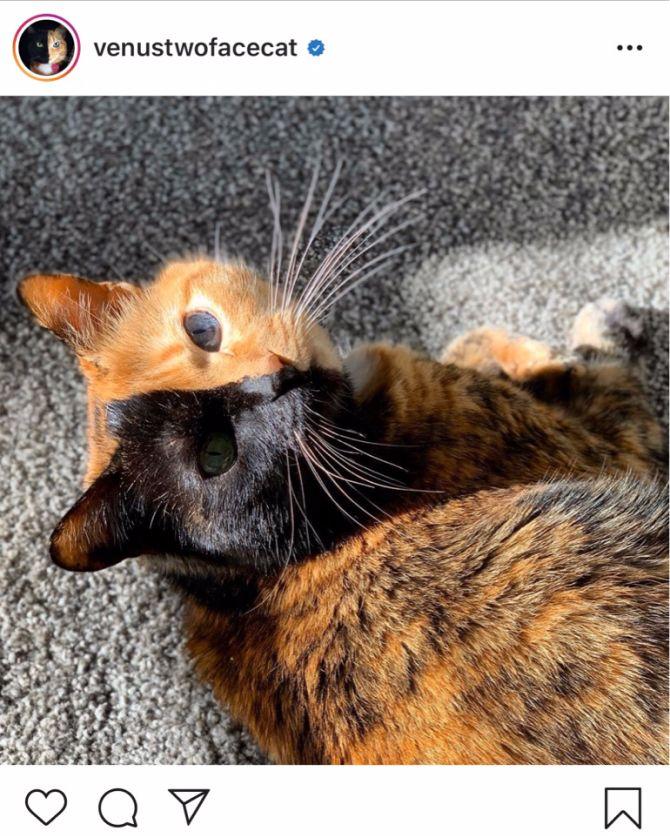 7 найкрасивіших кішок, у яких є свій Інстаграм 16