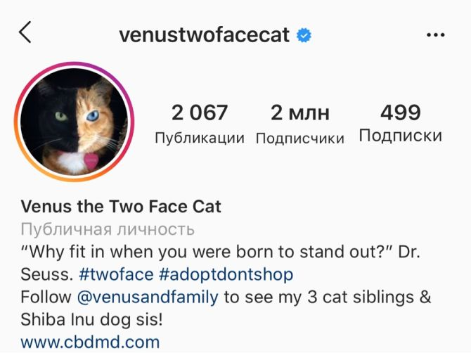 7 найкрасивіших кішок, у яких є свій Інстаграм 13