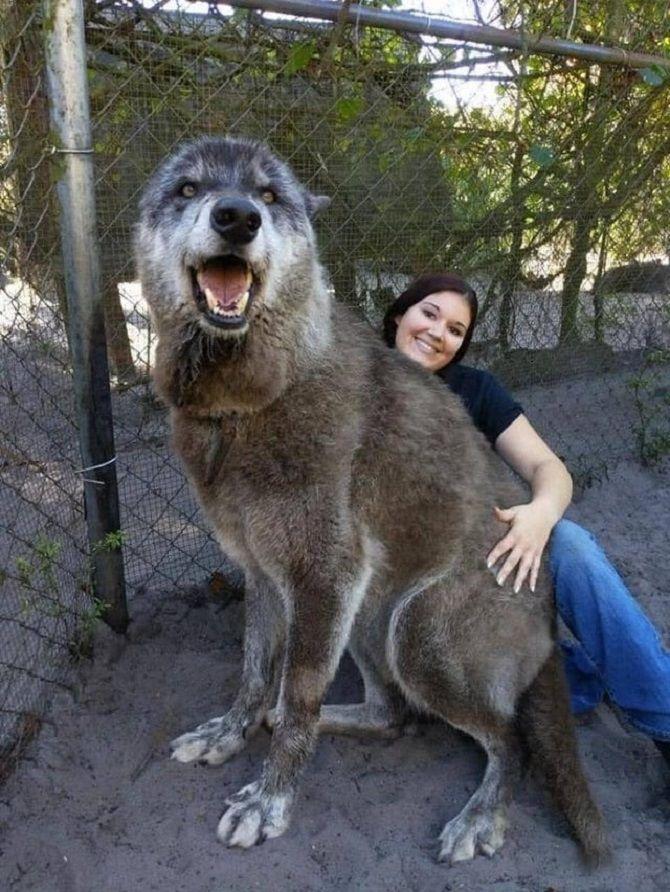 Большой и добрый пёс