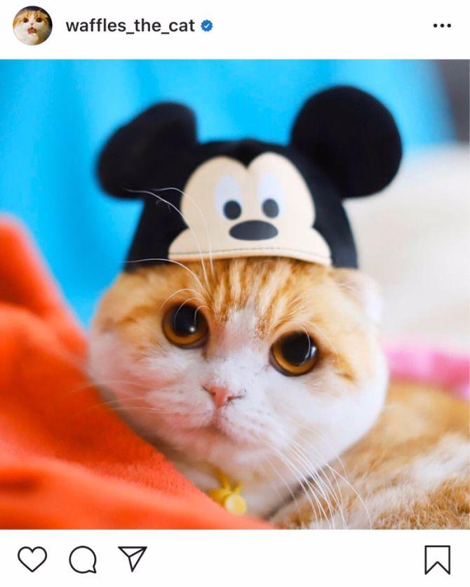 кот Вафля