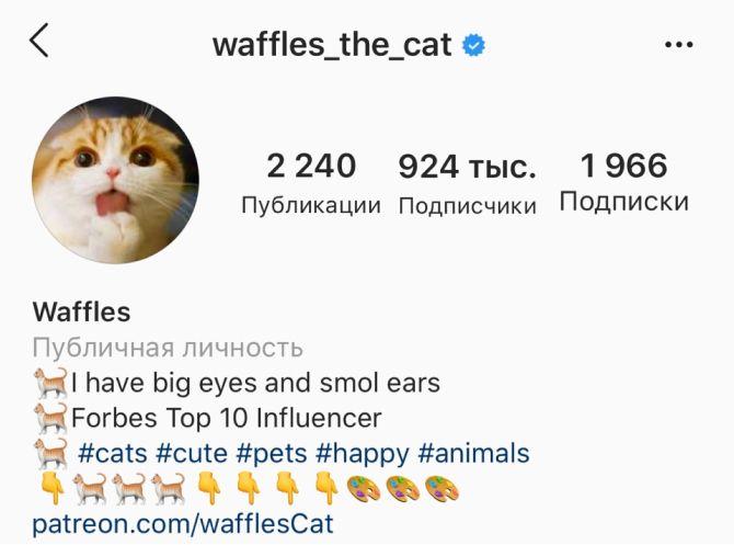 7 найкрасивіших кішок, у яких є свій Інстаграм 3