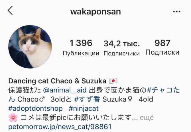 кот Wakaponsan
