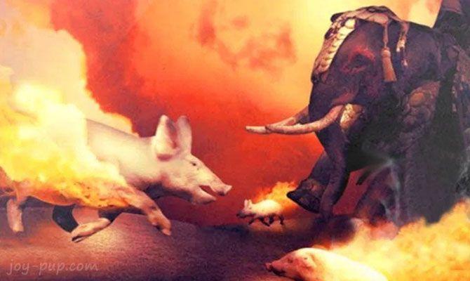 Горящие свиньи