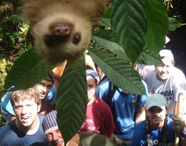 ленивец смотрит в объектив