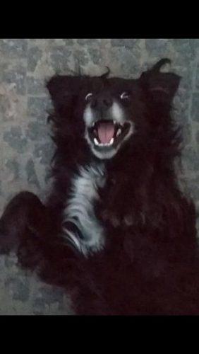 Самые смешные фотографии животных, снятые на телефоны (от читателей Joy-pup) 10