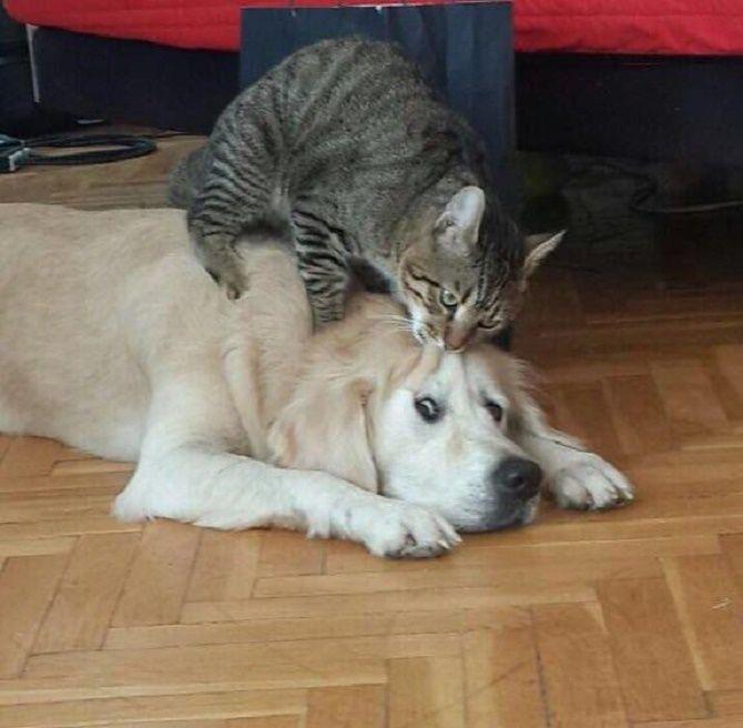 котики и собаки