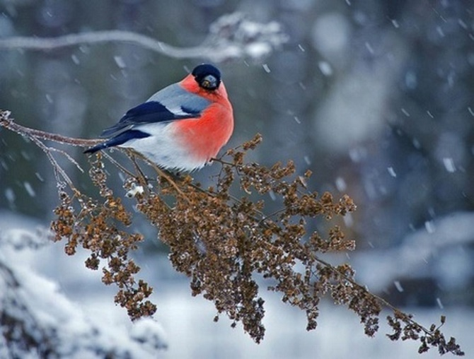 24 декабря: какой сегодня праздник, даты, традиции и приметы 3