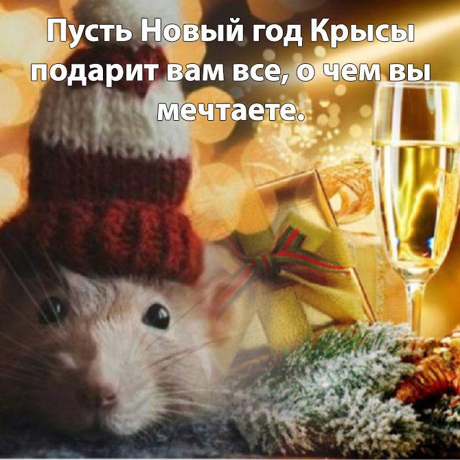 цветом, философские поздравления с новым годом крысы современных