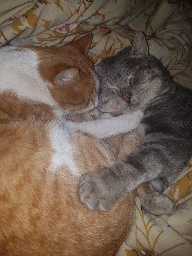 кішки обіймаються
