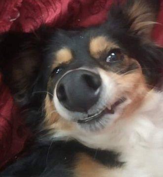 Самые смешные фотографии животных, снятые на телефоны (от читателей Joy-pup) 1