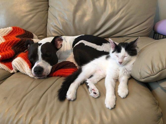 дружа кошки и собаки