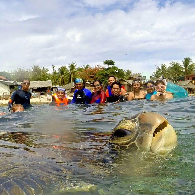 черепаха туристы