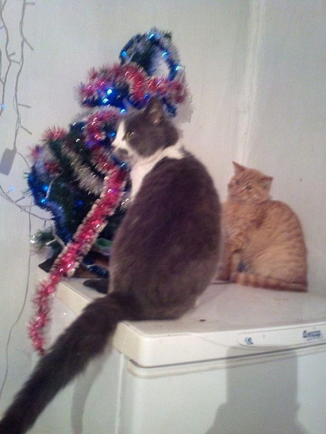 кішка та ялинка