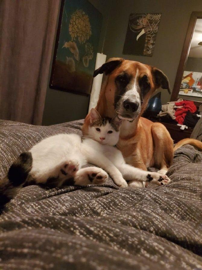 кошки и собаки дружба