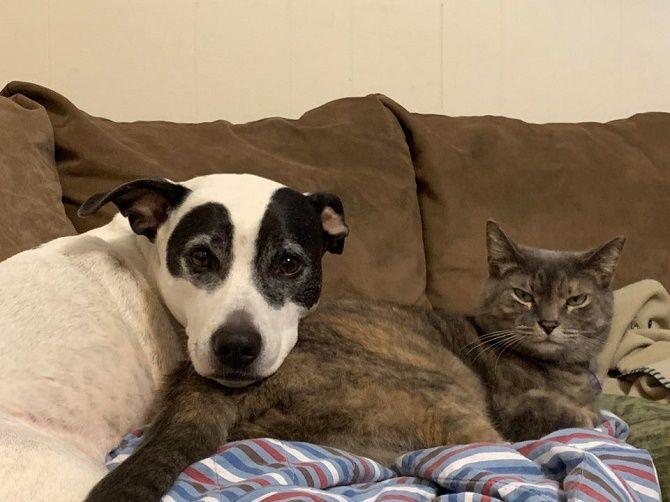 дружба котиков и собак