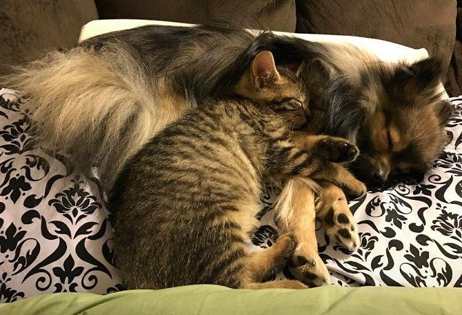 котики и собаки дружба
