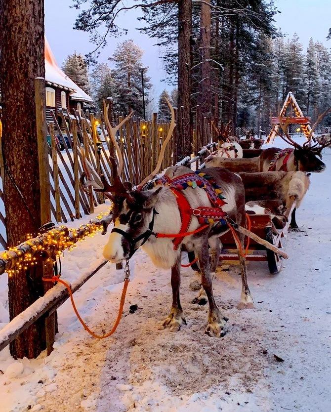 Сказочная Лапландия на новый год
