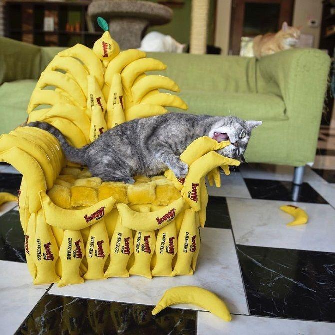кот с бананом