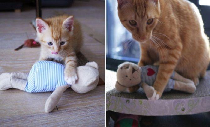 Наймиліші кішки, які дуже прив'язані до своїх іграшок 11