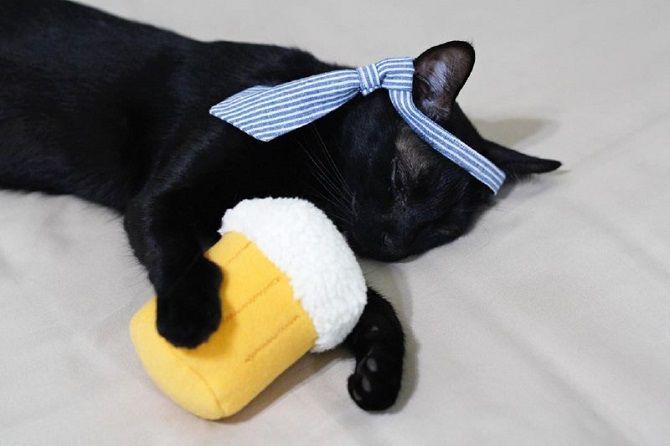 Наймиліші кішки, які дуже прив'язані до своїх іграшок 20