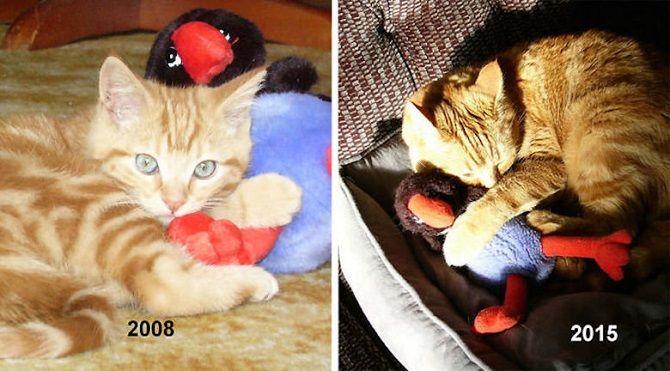 Наймиліші кішки, які дуже прив'язані до своїх іграшок 12