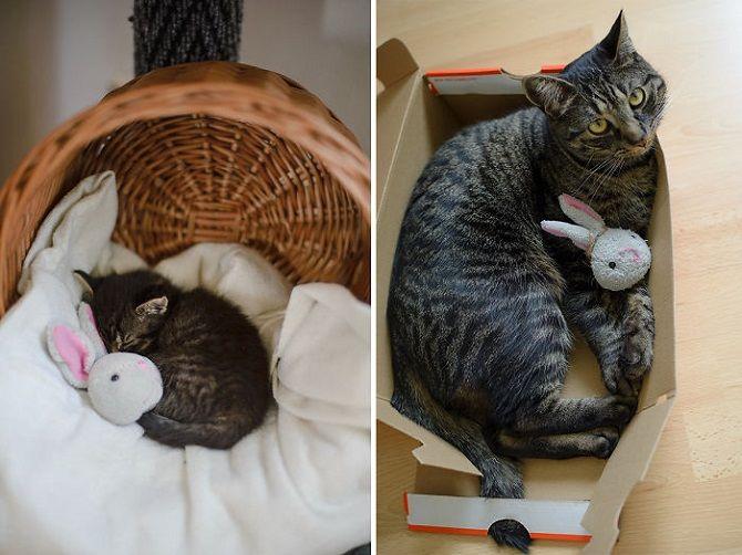 Наймиліші кішки, які дуже прив'язані до своїх іграшок 15