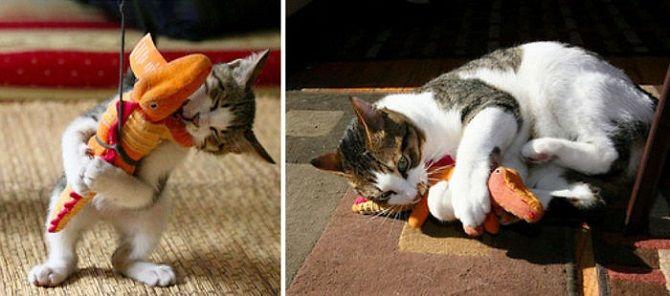 кот играет с игрушкой
