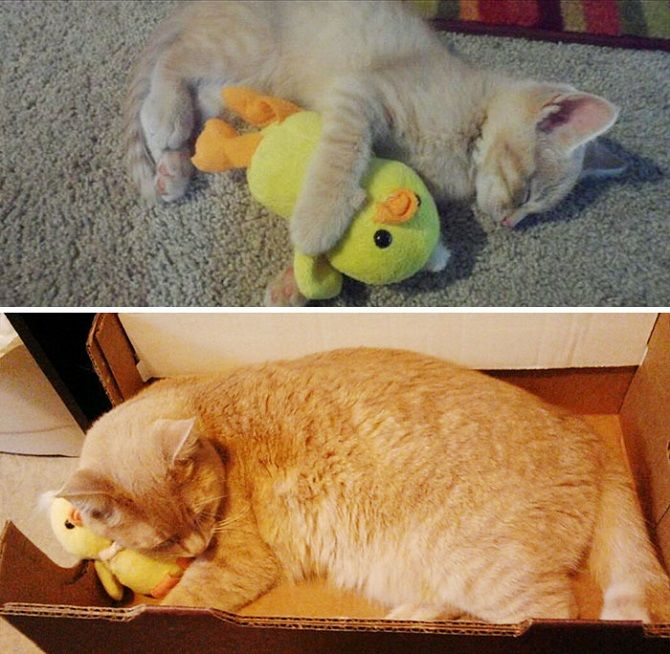 cat with a duck