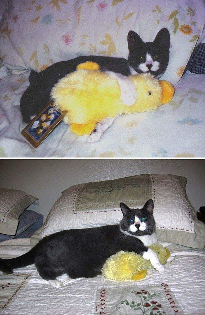 black cat and duck toy