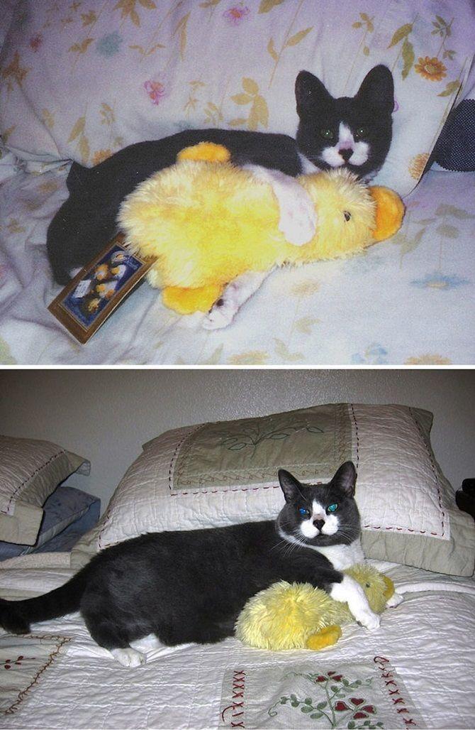 черный кот и игрушкой утка