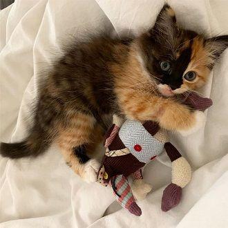 Наймиліші кішки, які дуже прив'язані до своїх іграшок 18