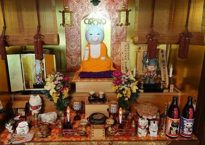 Nyan Nyan Ji храм котов