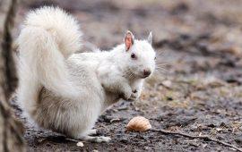 Самые красивые животные альбиносы, которые похожи на сказочных героев