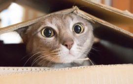 Найсмішніші фотографії тварин, зняті на телефони (від читачів Joy-pup)