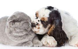 Самые яркие примеры того, что дружба между кошками и собаками существует