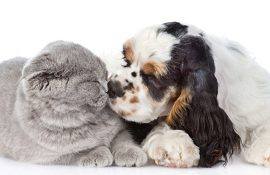 Найяскравіші приклади того, що дружба між кішками та собаками існує