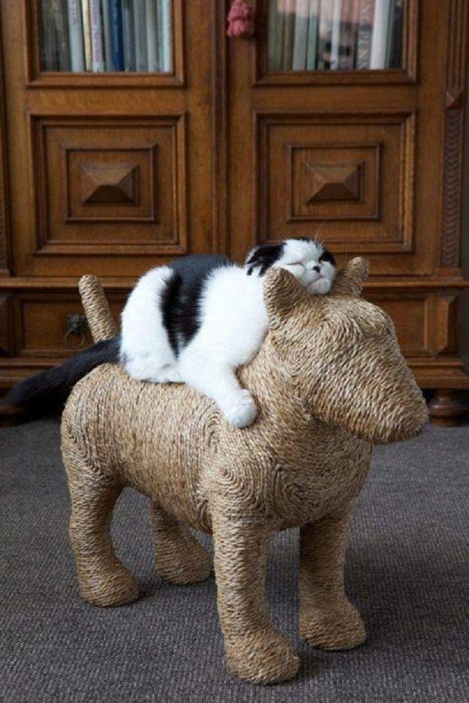 кот верхом на игрушечном коне