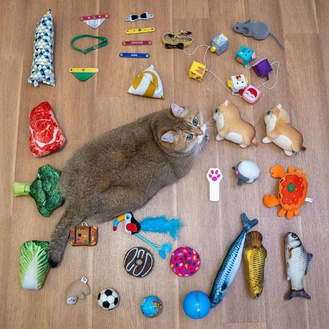 Наймиліші кішки, які дуже прив'язані до своїх іграшок 5