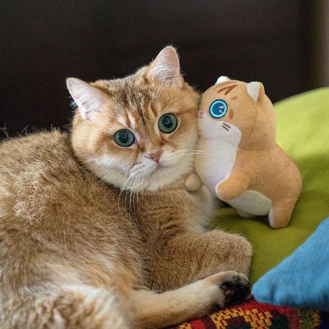 Наймиліші кішки, які дуже прив'язані до своїх іграшок 6
