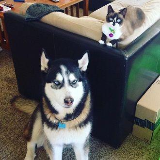 Наймиліші кішки, які дуже прив'язані до своїх іграшок 9